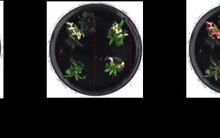 Analysis of leaf area