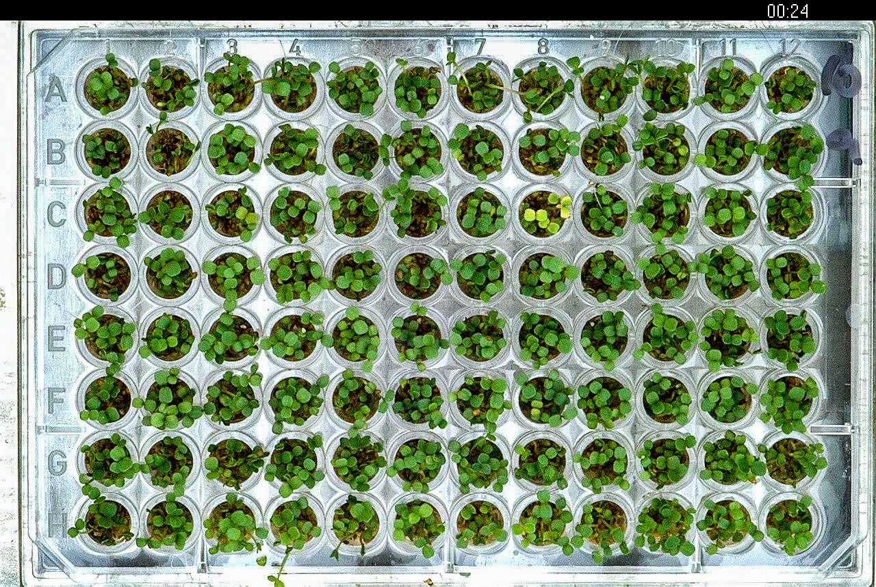Seedling MTP