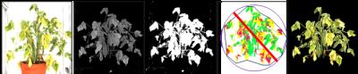 Phenotyping Bean Plant