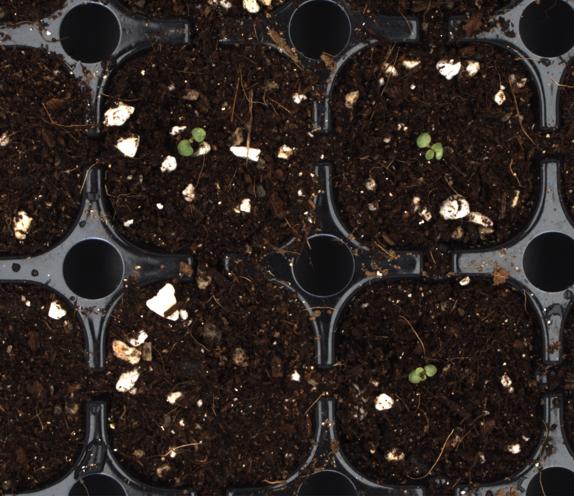 Seedlings close up
