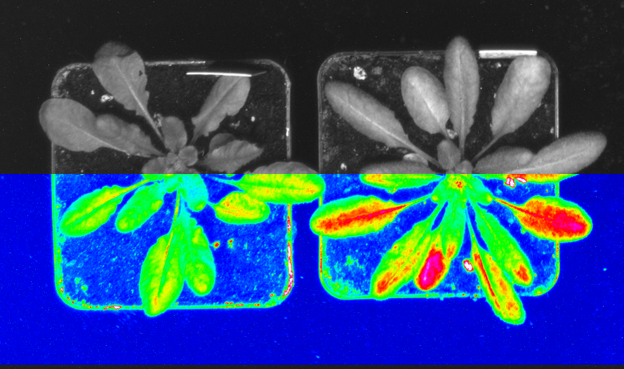GFP-imaging