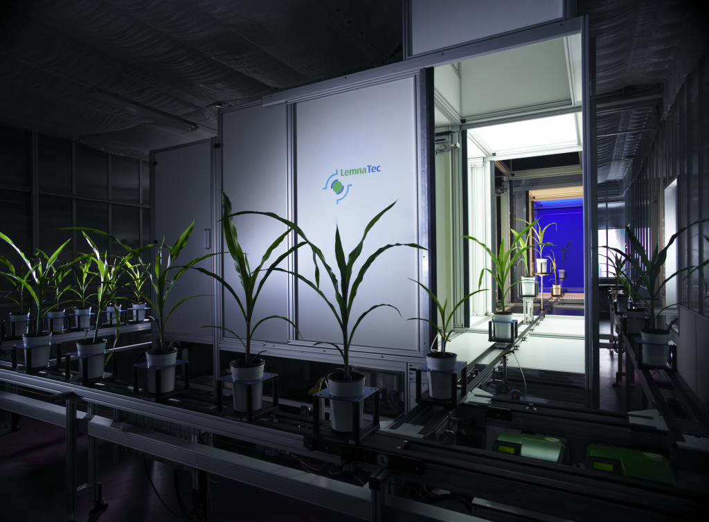 Maize Plants on Phenotyping System