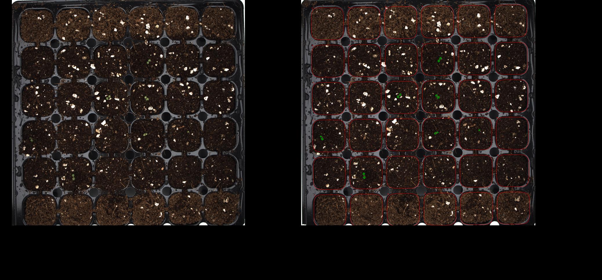 Seedlings Detection with LemnaGrid