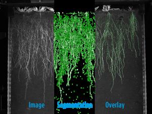 Root Segmenting