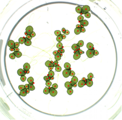 duckweed tests