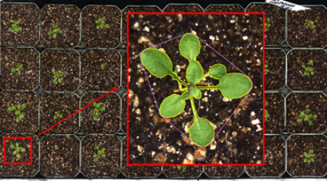 Plant Phenotyping; Image Processing